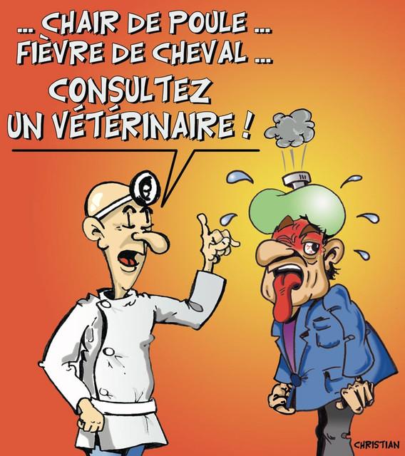 veterinaire web thumb