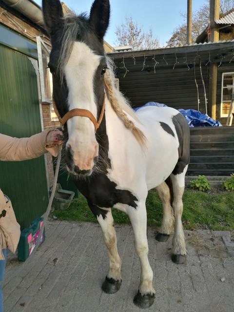 paard_2