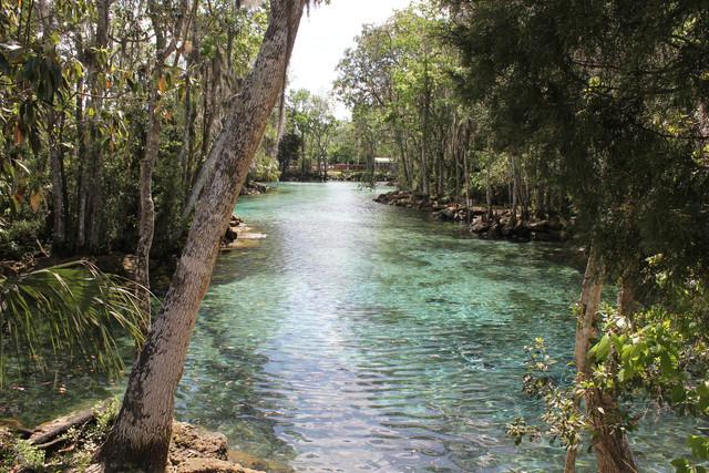 Manatees Crystal River