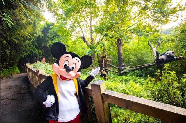 [Shanghai Disney Resort] Le Resort en général - le coin des petites infos  - Page 6 W890