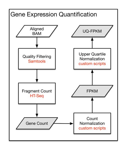 gene expression quantification pipeline