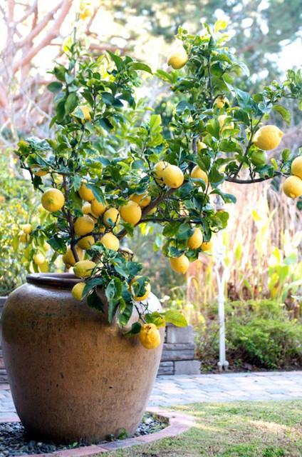 Lemon doma 43