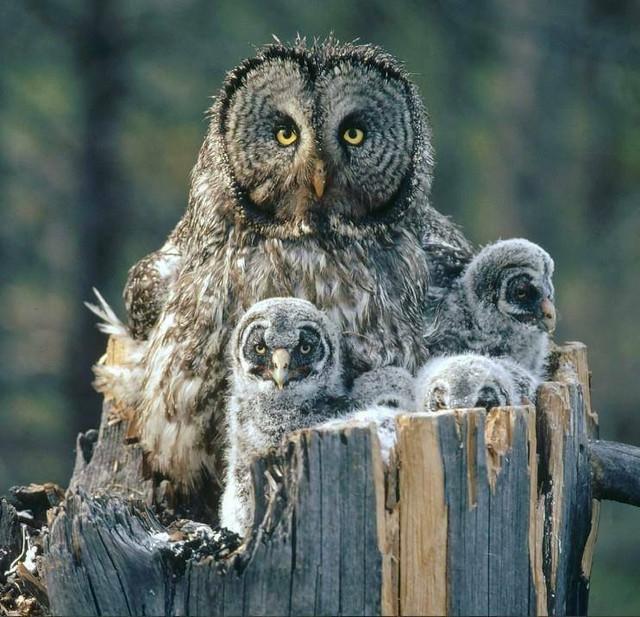 owls_sweet3