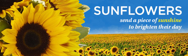 product_flowers_sunflowers_810x244