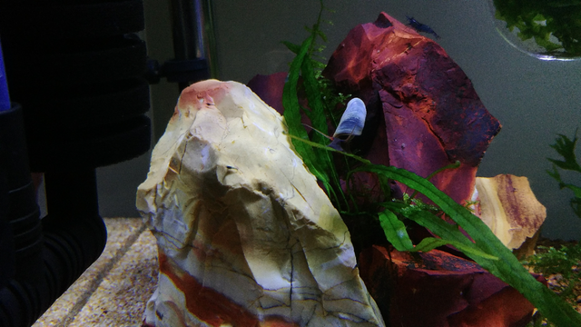 snail stone