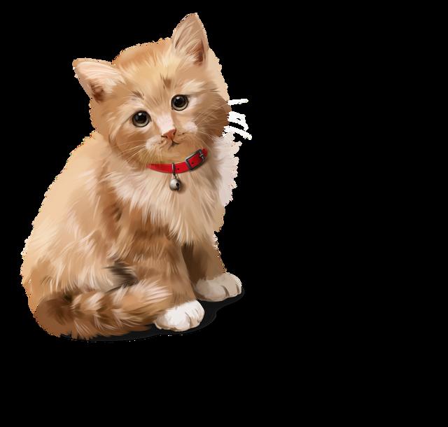 CatDog-4.png