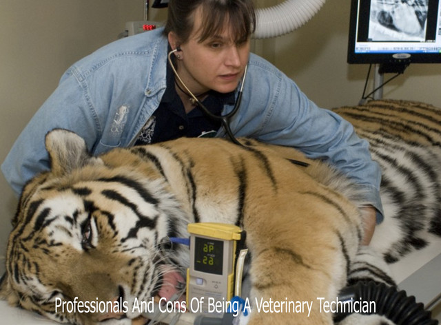 Professionals And Cons Of Being A Veterinary Technician