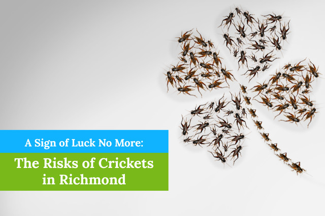 The Risks of Crickets in Richmond, VA