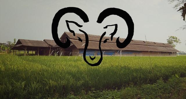 Kerjasama peternakan keluarga, mencari berkah di kambing & domba