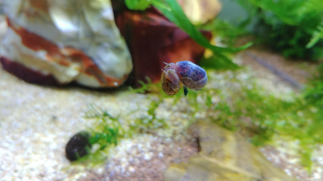 air snails