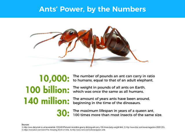 The maximum lifespan in years of a queen ant, 100 times more than most insects of the same size.