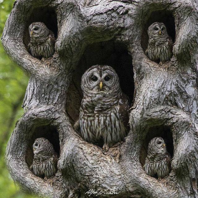 owls_sweet