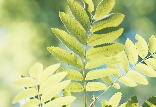 Leaf Yes