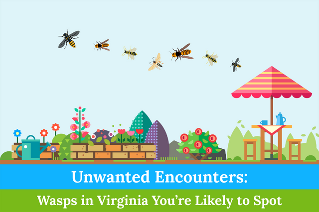 Unwanted Encounters: Wasps in Virginia You're Likely to Spot