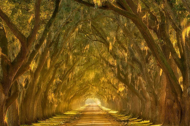 Oak Alley Plantation Louisiana 2