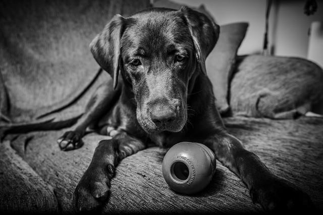 Que pensais de los perros? Leia2_4592