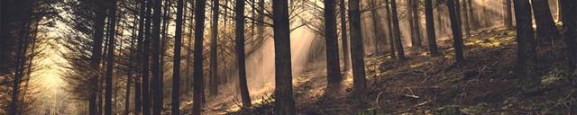 [Image: cropped_forest_header_dark.jpg]