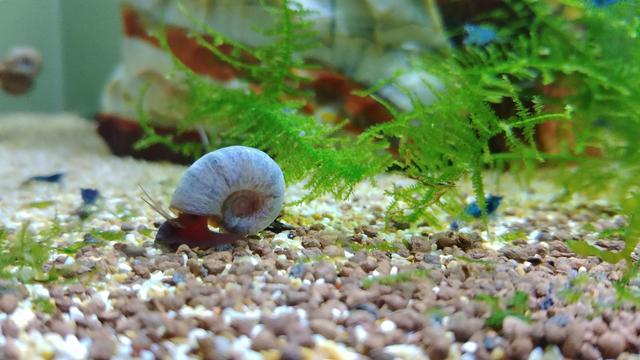new-snail
