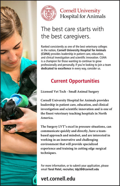 Licensed Veterinary Technician  Small Animal Surgery Job Opening