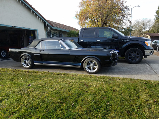 Mustang-1.jpg