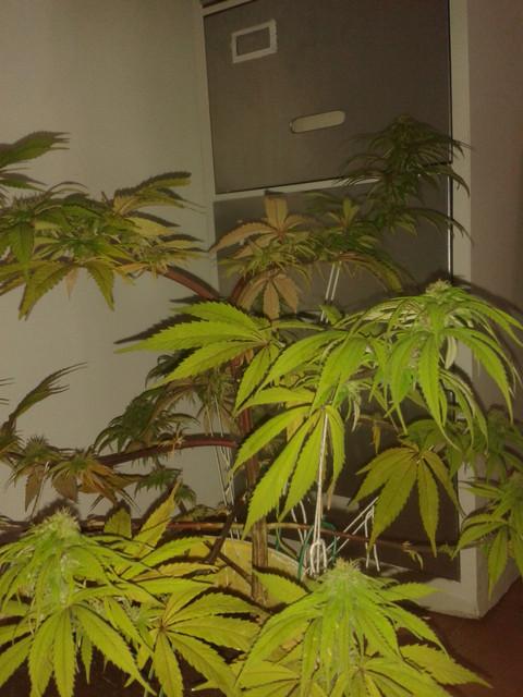 PLANT23