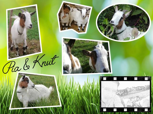 mes deux jumelles Pia & Knut - Page 3 Poster