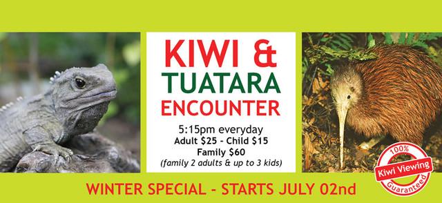 Late_Kiwi_Feed