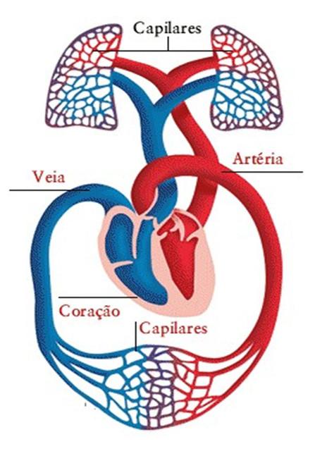 Especialidade de Coração e Circulação Respondida