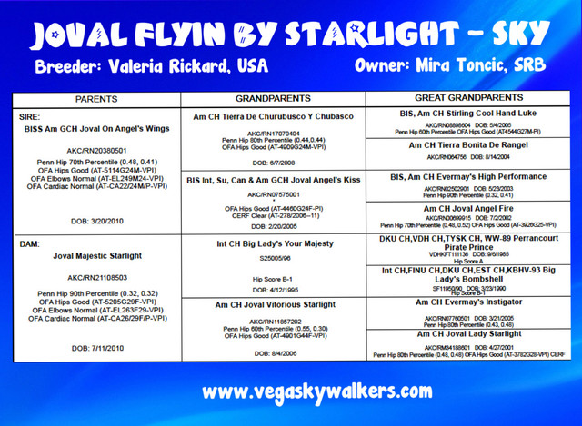 Pedigree_Joval_Flyin_by_Starlight_2.jpg