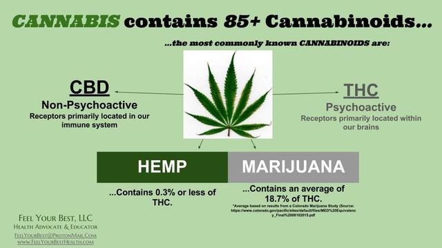 Cannabis Chanvre Zed Le Buraliste