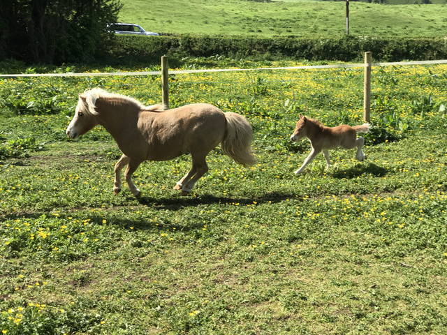 Official Foal Thread - Page 2 IMG_2336