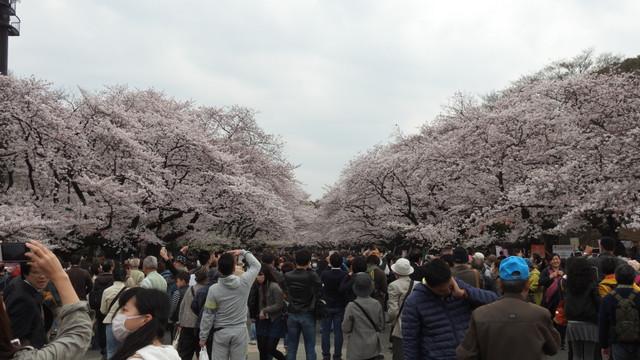 4923 Tag 11 Tokyo Tag 1 Ueno Park