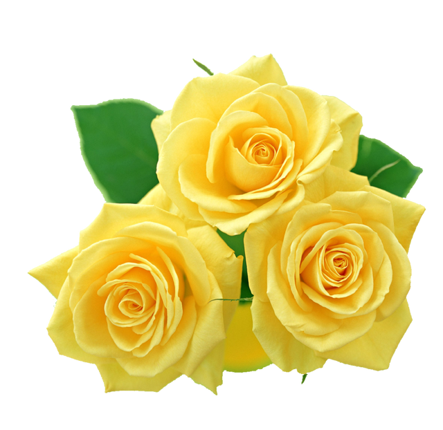yellow_roses_png_by_melissa_tm_d49t1iw
