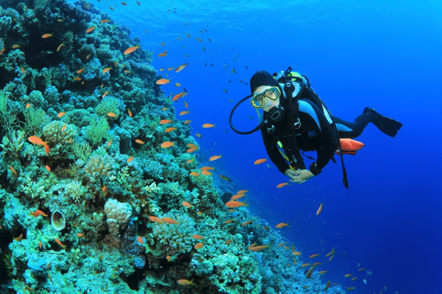 Scuba_Diving_i_Stock_000017898750_Small