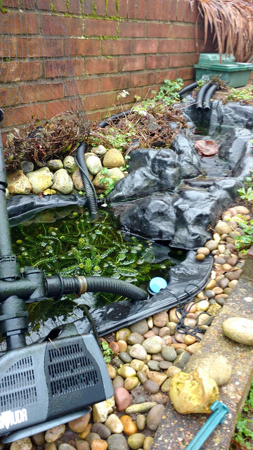 Faulty filter pond equipment forum pond life for How to remove algae from pond without harming fish