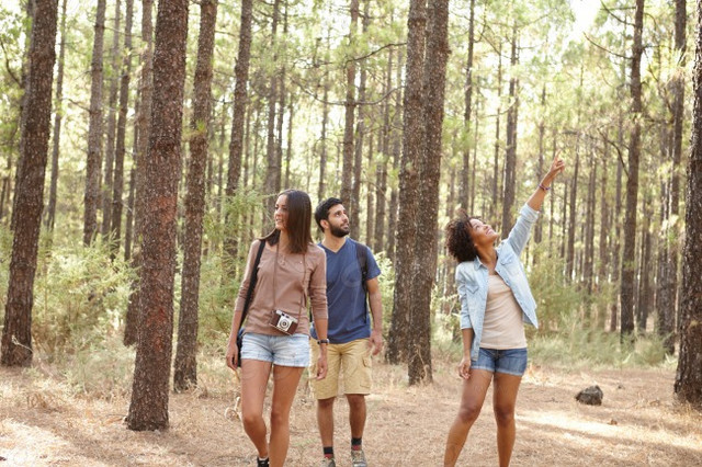 Stock photo friends exploring a pine tree forest 11065