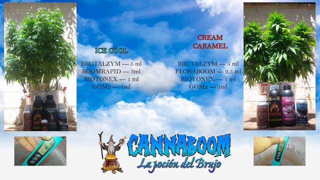 El Brujo a Latigazos ...(Sweet Seeds)+(CannaBooM)(2018) Riego_23_julio