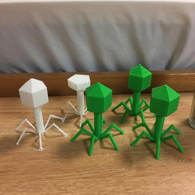 Thick Bacteriophage  Model