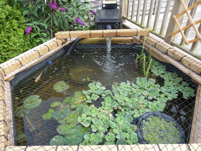 Pond plants for winter plants forum pond life for Pond plants that survive winter