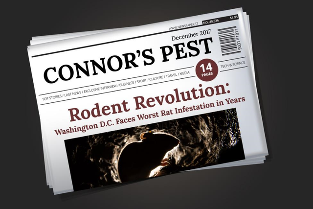 Front of a newspaper detailing Washington, D.C.'s rodent infestation