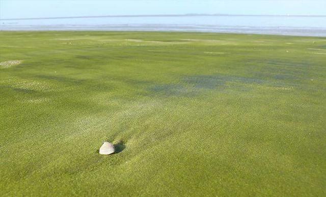 1205760 Green Sand In Kourou French Guiana 1527662074 728 cd95873bad 1527959589