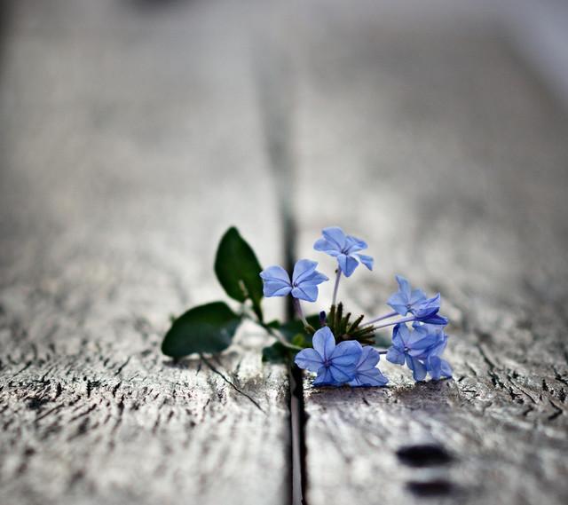 flowers_728256