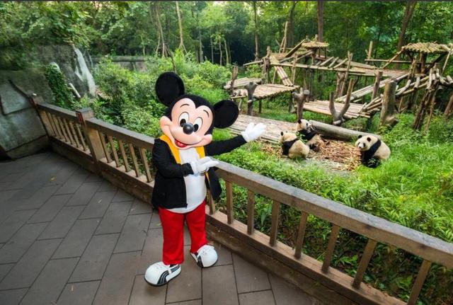 [Shanghai Disney Resort] Le Resort en général - le coin des petites infos  - Page 6 W892