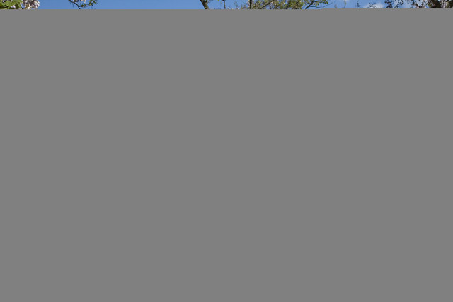 Paris playing chess at the jardins du luxembourg 2955