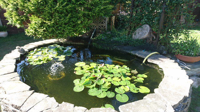 The Grand 4000g Pond Build Pond Design And Construction