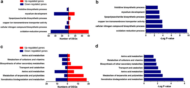 Figure 5 GO enrichment and KEGG pathway analysis of differentially expressed genes in M