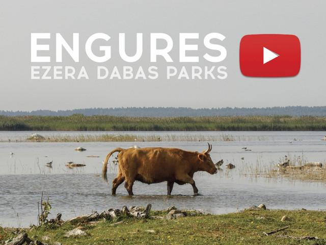 Engures_ezera_dabas_parks_02