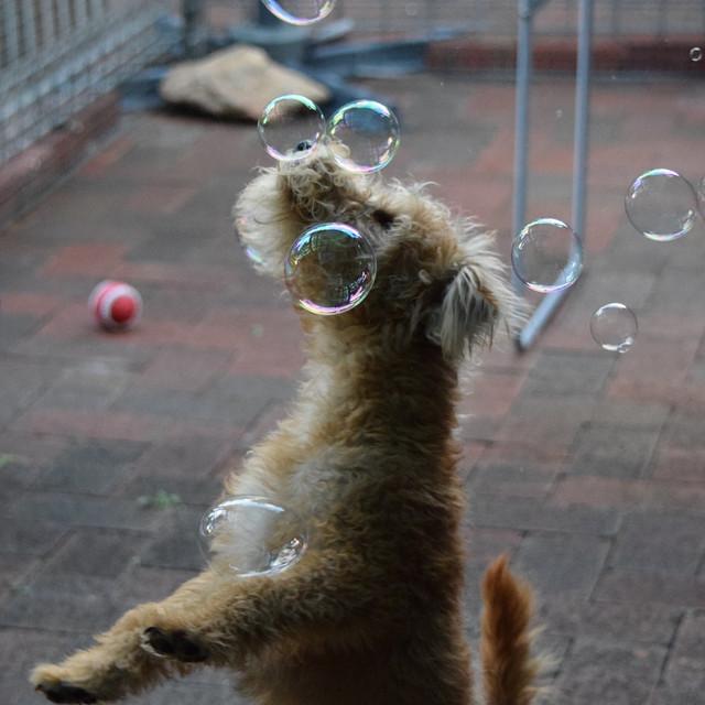 bubbles_pets