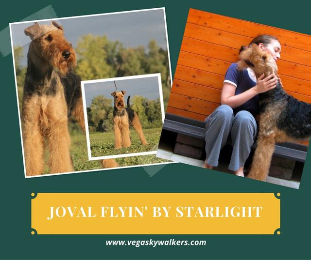 joval_flyin_by_stralight_sky_vlasnica_mi