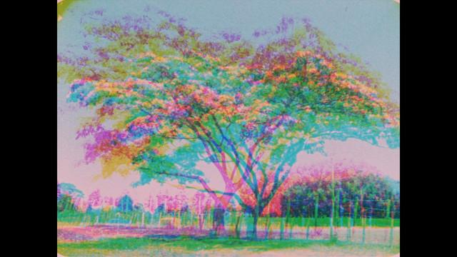 TIND Marae tree